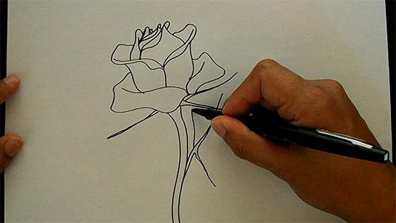Como Desenhar Uma Rosa Videoaula